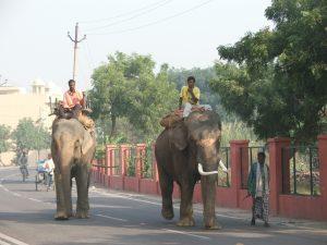 éléphants Agra