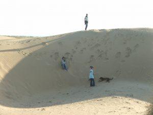 Camel safari 2