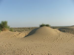 camel safari 3